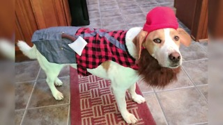 Dogs in Halloween Costumes - Video