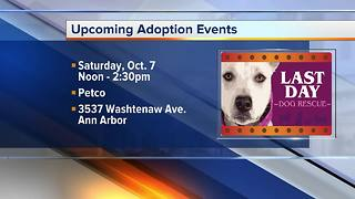 Pet of the Week: Zuki - Video