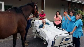 Touching moment horse brings joy to hospice patients final days