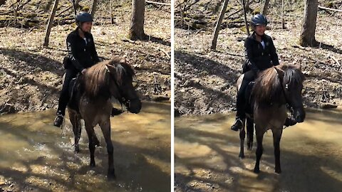 Horse takes swim break without a care in the world