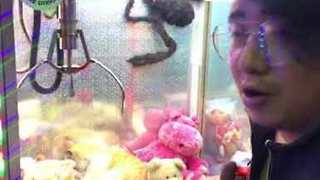 Cat Relaxes with Stuffed Animals Inside Claw Machine - Video