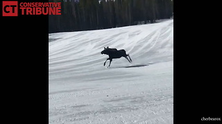 Snowboarders See Moose - Video