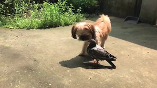 Dog meets pigeon, strike up instant friendship