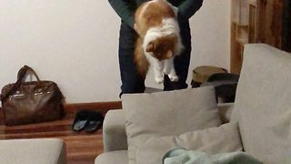 Flying fluffball! Cat loves being thrown in the air by owner  - Video