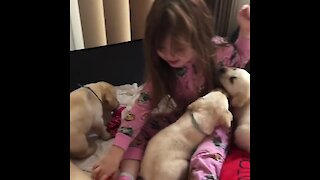Little girl gets swarmed by litter of puppies