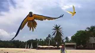 Beautiful Parrots Enjoy a Day at the Beach in Singapore - Video