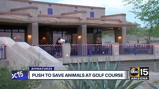 Community pushing to save animals at Phoenix golf course - Video