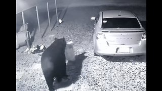 Bear Helps Itself to Some Dog Food From Florida Home