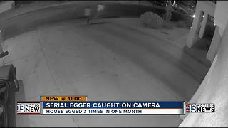 Serial egger caught on camera - Video