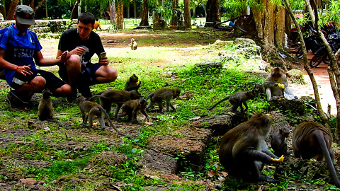 Tourist Want Take Picture With Monkey