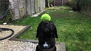 Amazing dog trick in super slow motion - Video