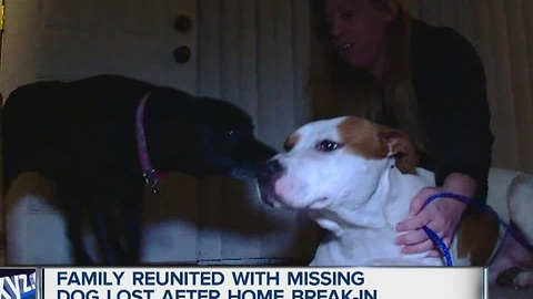 Family reunited with dog missing after break in