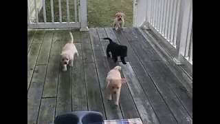 Stampede of Adorable Puppies Master the Steps - Video