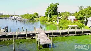 Green algae water in Southwest Florida - Video