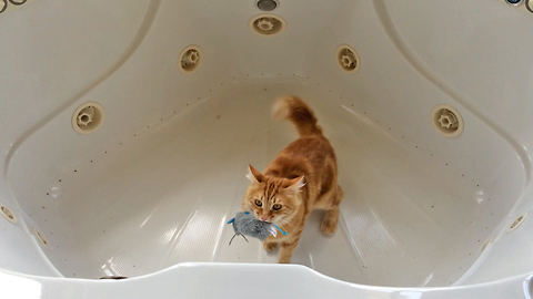 Jack the Cat Goes Crazy in Bathtub with Catnip mouse