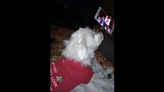 Dog has priceless reaction to Fergie's 'National Anthem' debacle - Video