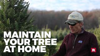 Tips for picking out the perfect Christmas tree | Rare Life - Video
