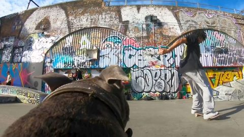 Paw-some view! Dog becomes camera man to film local skateboarders