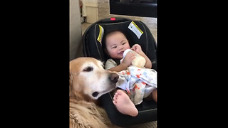 Dog and baby are best friends who love spending time together