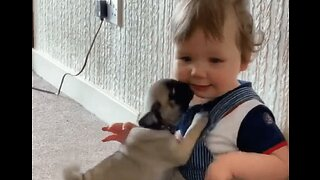 Baby Vince Enjoys Playtime With His Pug Pals