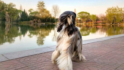 Owner Spends Thousands Of Pounds On The Most Glam Dog In The World