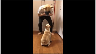Frenchie had mind blown by man in dog mask