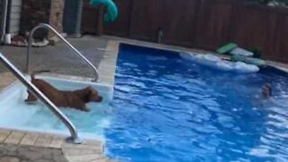 Dog jumps in the pool to rescue drowning owner
