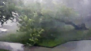 Awesome video shows power of Mother Nature as storm brings tree crashing down - Video