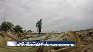 Farmers struggle to grow crops in extreme heat - Video