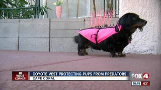 Coyote Vest could save a dog's life - Video