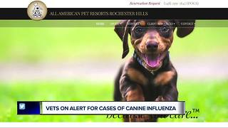 Vets on alert for cases of canine influenza - Video