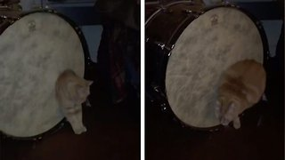 Fat bass: Bizarre moment chubby cat can't squeeze through bass drum