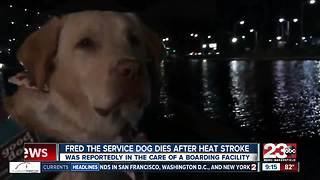 Fred the Service Dog dies after heat stroke - Video