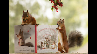 New squirrel Christmas book