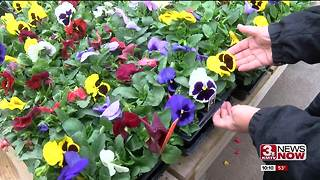 Weather delaying spring flowers - Video