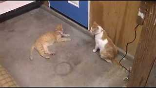Cats Bring Mouse Into The House And Can't Catch It