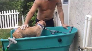 Pet Owner Gives Rescue Dog a Medicated Bath - Video