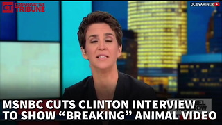 MSNBC Spices Up Clinton Interview With A Panda