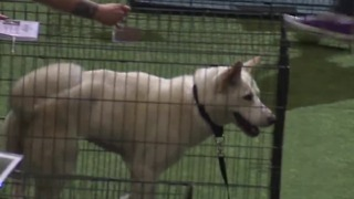 Animal Foundation host 15th annual Best in Show - Video