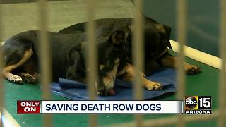 Valley man saving dogs from death row - Video