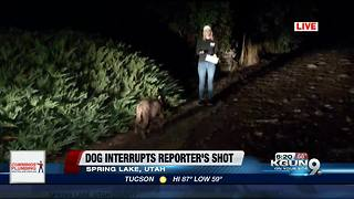 Reporter has unexpected guest during live shot