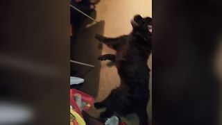 Dog Is A Twerking Expert - Video