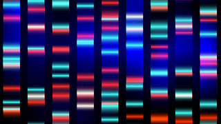 DNA tests are a popular resource for people wanting to understand their ancestry and disease probability. But how accurate are these tests? - Video