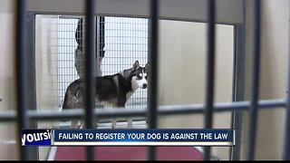 Register your dog, it's the law
