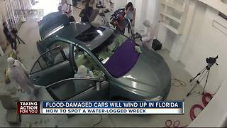 Flood cars expected to wind up in Florida - Video