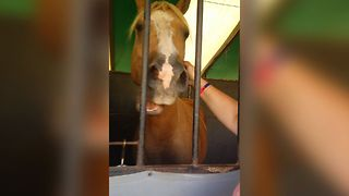 Horse Loves Getting Scratched Behind His Ear - Video