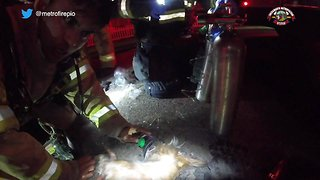 Firefighters Revive Dog Using CPR - Video