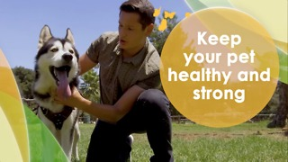 Keep your pet healthy and strong - Video