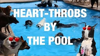 Cool Dogs Hanging Out By the Pool - Video