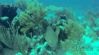 Shark Forages Through Ocean Coral - Video